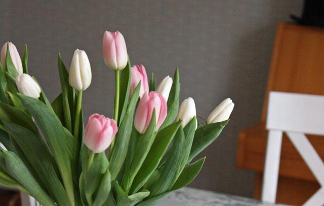 Vaaleat tulppaanit