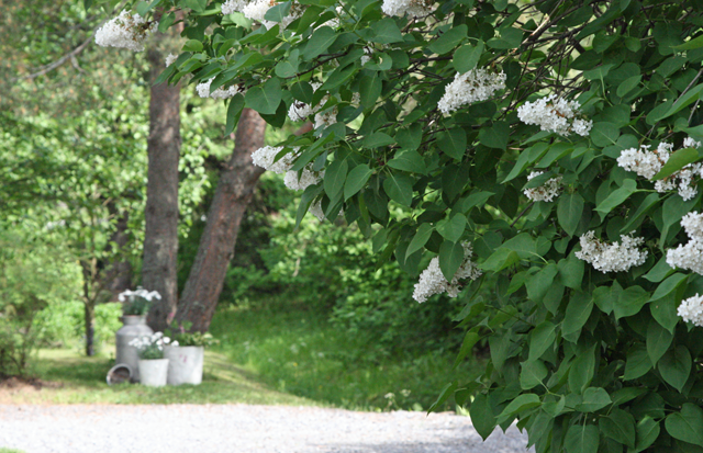Kesä ja kukat
