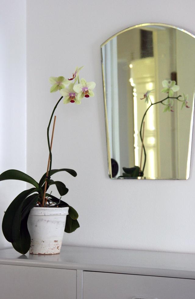 Kaunis orkidea