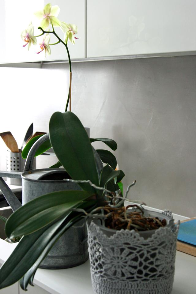 Kukkiva orkidea