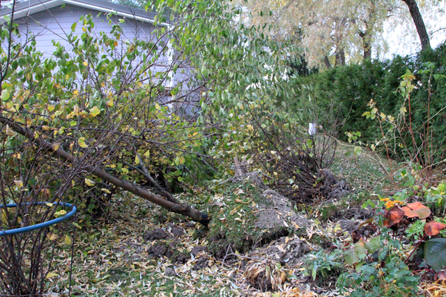 Puut ja pensaat irti juurineen