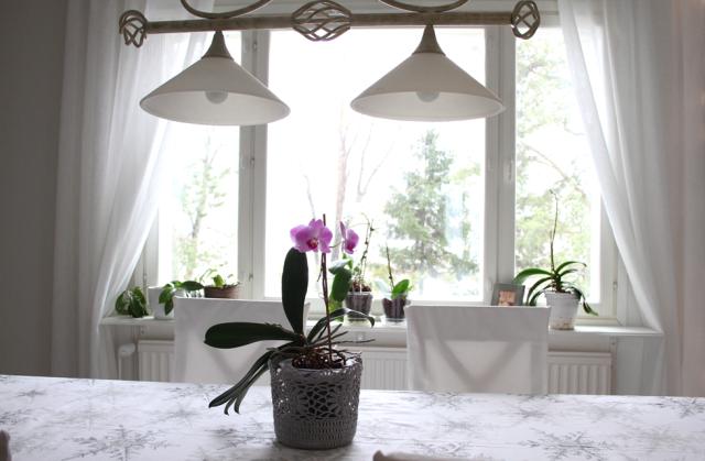 Orkidea ruokapöydällä