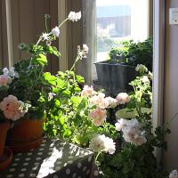Kukkien talvisäilytys