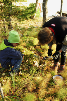 Mummi opettaa Pikkuapulaista sienestämään