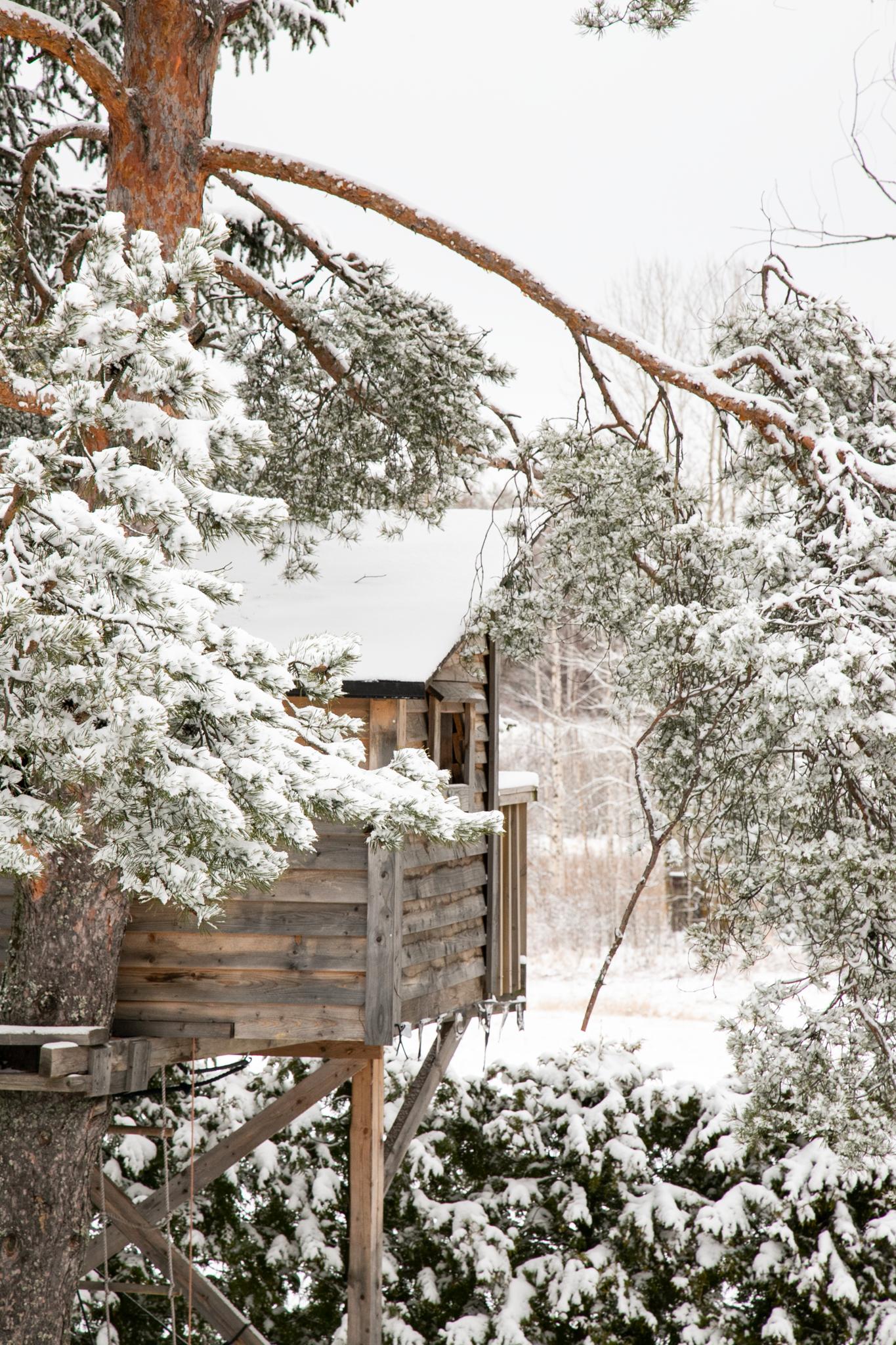 Lumettoman talven jälkeen, huhtikuun 2. päivänä