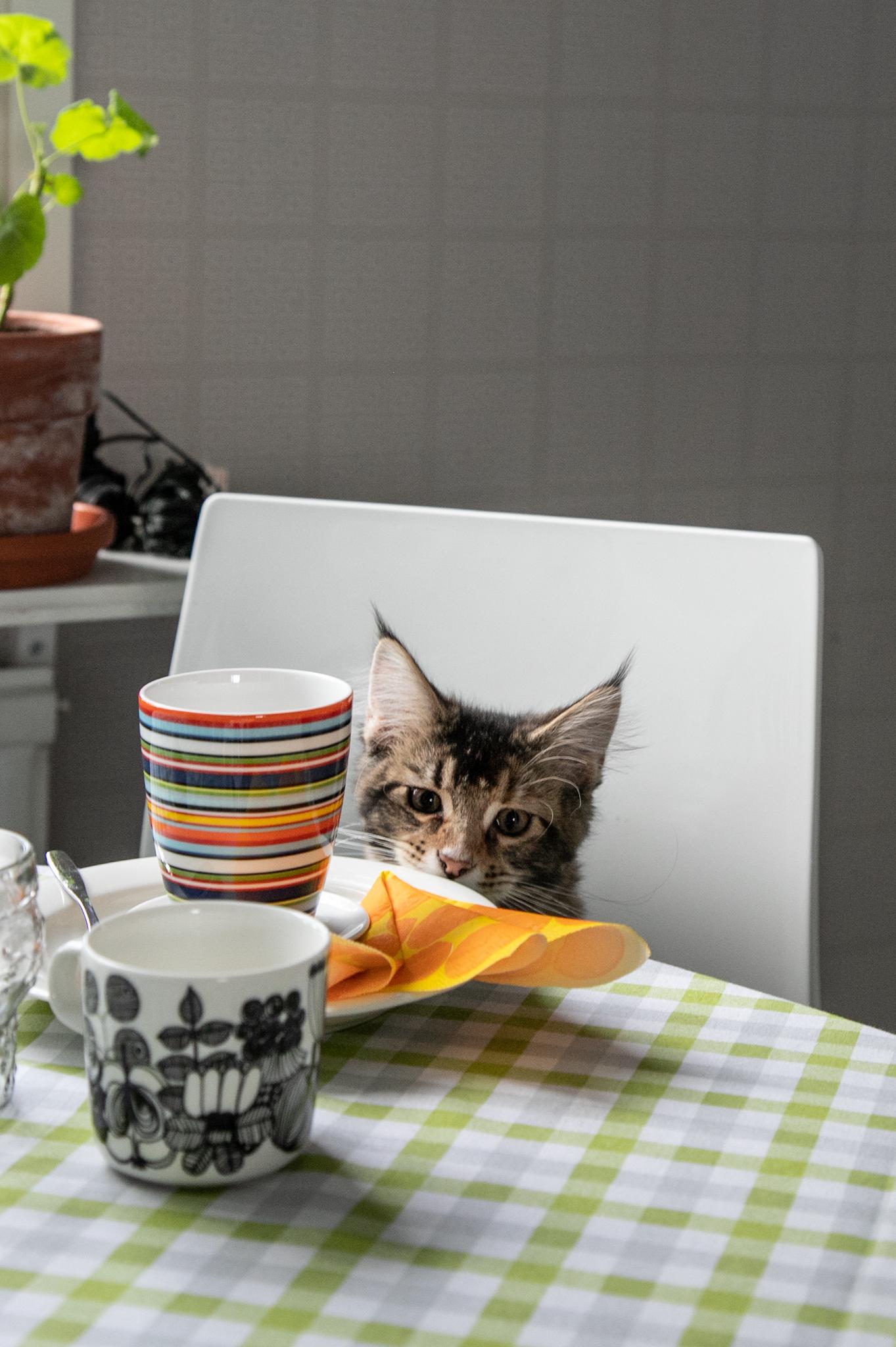 Minullekin aamupalaa!